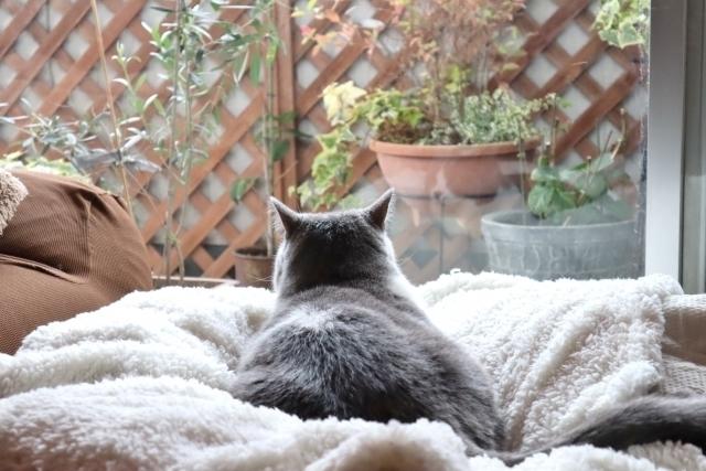 猫背 お腹 線 消す1.jpg