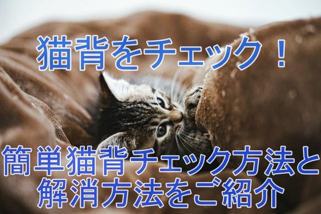 tomcat1576_TP_V.jpg
